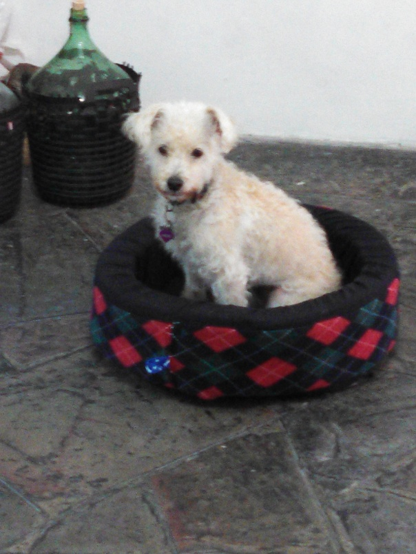 Puzzle sitting in her bed, 9-16-14